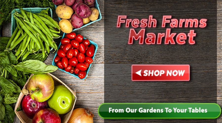 City Fresh Produce – Suppliers Wholesalers Manufacturers